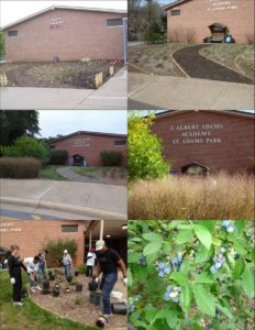 1. Bayscape (top 4 photos); 2. Highbush Blueberry Rain Garden (bottom 2 photos)