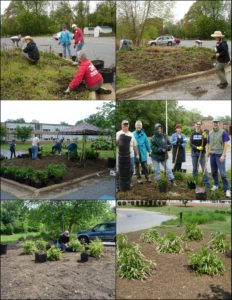 April & May 2011, Master Gardeners & college interns transform bed to Sweetspire Xeriscape