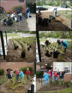 April 2011, Master Gardeners work on site prep & planting - Highbush Blueberry Rain Garden