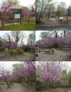 2012-12-19 PC-Redbuds on path to Forest Buffer