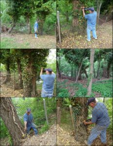 5-10-14 Ricky removing invasive English Ivy