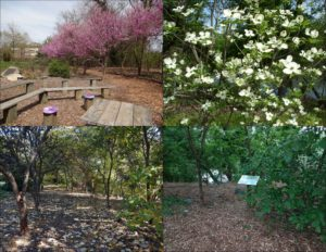 8. Redbud Row & Dogwood Grove; 9. Waterman's Garden (lower right photo)