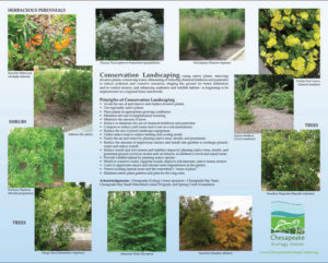 F-SIGN_Conservation_Landscaping_16x20_12.6_MB.pdf - Adobe Reader 952010 62317 PM
