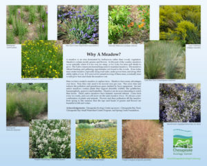 H-SIGN_Meadow_16x20_231_KB