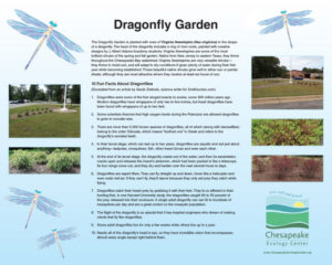 J-SIGN_Dragonfly_Garden_16 x 20_170_KB