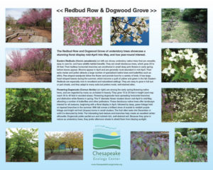 K-SIGN_Redbud_Row-and_Dogwood_Grove_16 x 20_226_KB