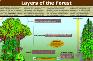 N-SIGN_Forest_Layers_22.57x34.57_204_KB