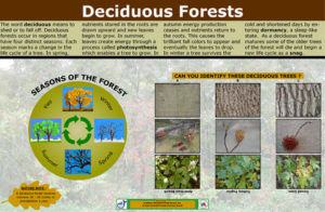 O-SIGN_Forest_Deciduous_22.51x34.51_214_KB