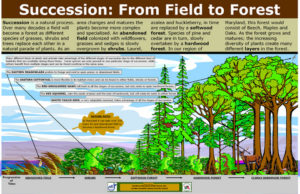 P-Forest_Succession_22.51x34.93_232_KB